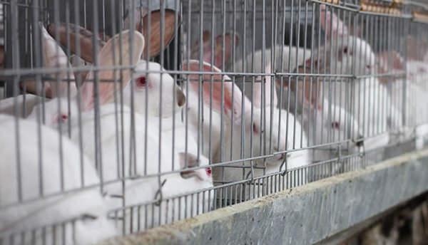 Облік розведення кролів в 1С:БСПУ
